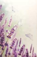 Lila Blom fjäril