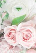 Minikort Rosa Vita Rosor, Textfri