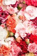 Minikort Blomster, Textfri