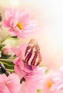 Minikort Rosa Blommor & Fjäril, Textfri