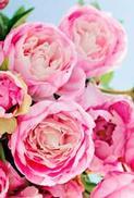 Minikort Rosa Blommor, Textfri