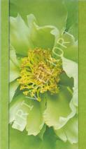 Lime-Gröna blommor, utan text