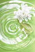 Vit blomma i vatten, textfri